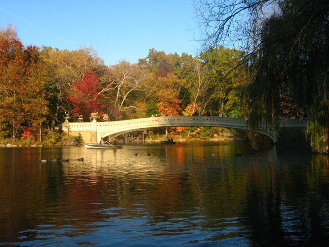 The Bridge towards Peace