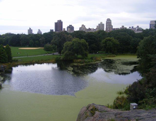 Lake next to belveder castle