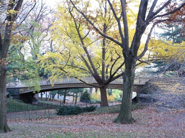 CP Bridge Autumn 2009