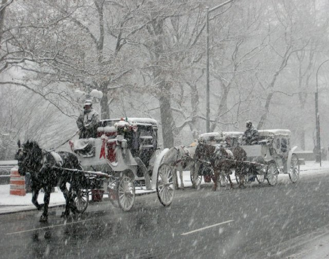 Horsies In The Snow