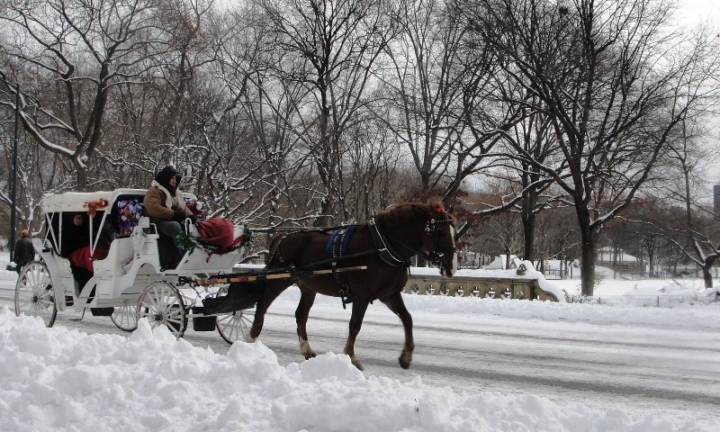 Romantic Horse-drawn gallop in Central Park