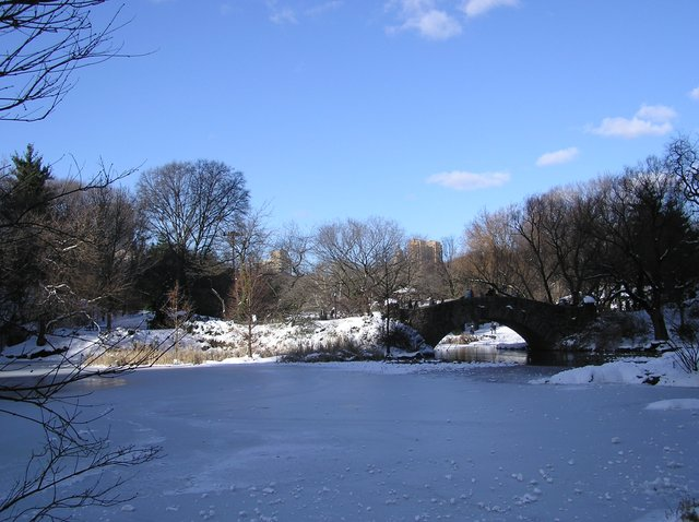 The Pond, frozen