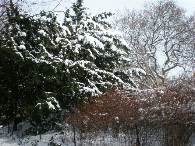 I love CP in the snow!