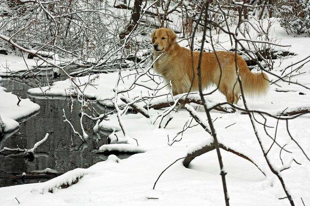 Winter Wildlife In The Rambles
