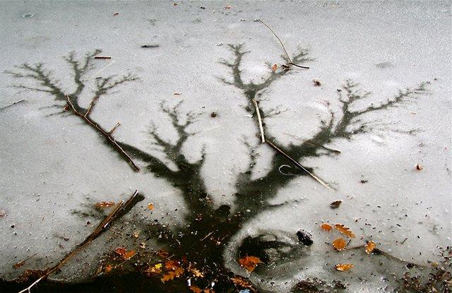 Tree Melt
