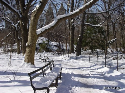 Snowy Ramble Benches