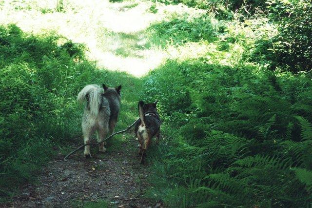 Lobo and Ivie
