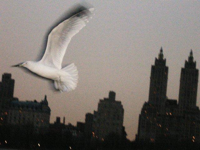 Flight Over the Reservoir