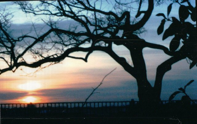 A Tree Against the Setting Sun