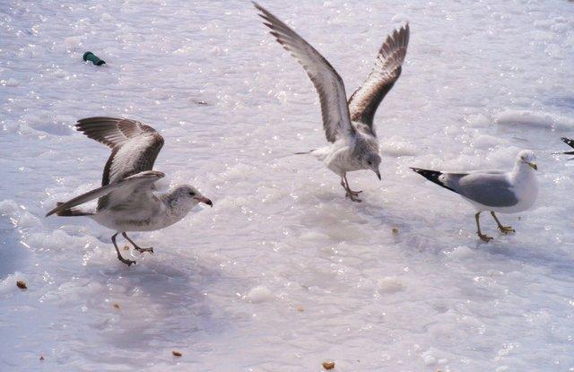 Ice Landing!