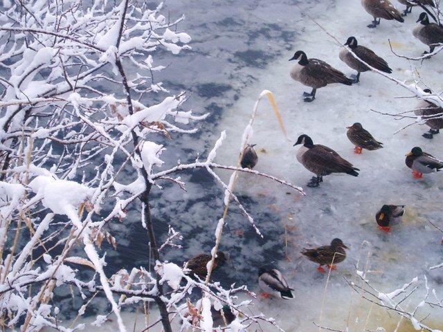Icy Refuge