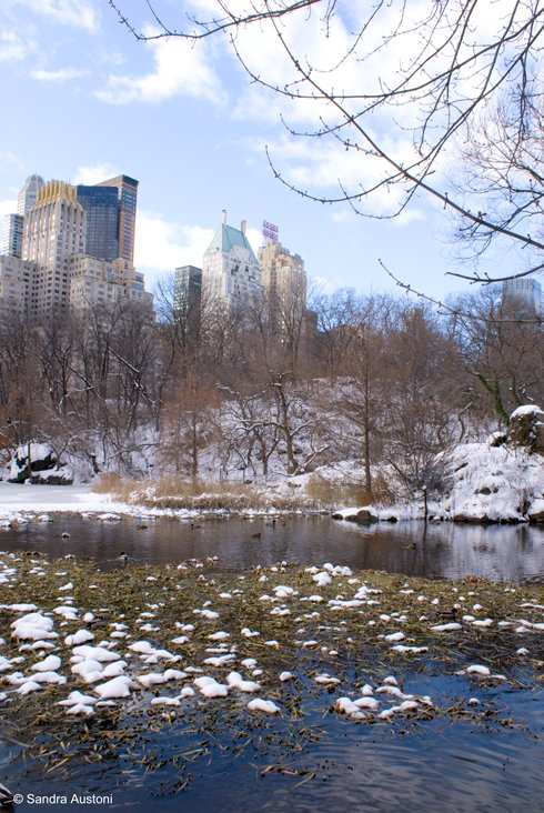 Winter scene in Central Park