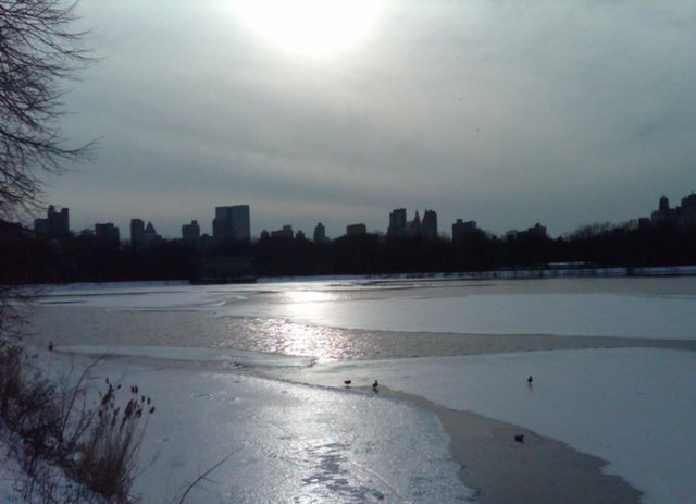 The Central Park Res