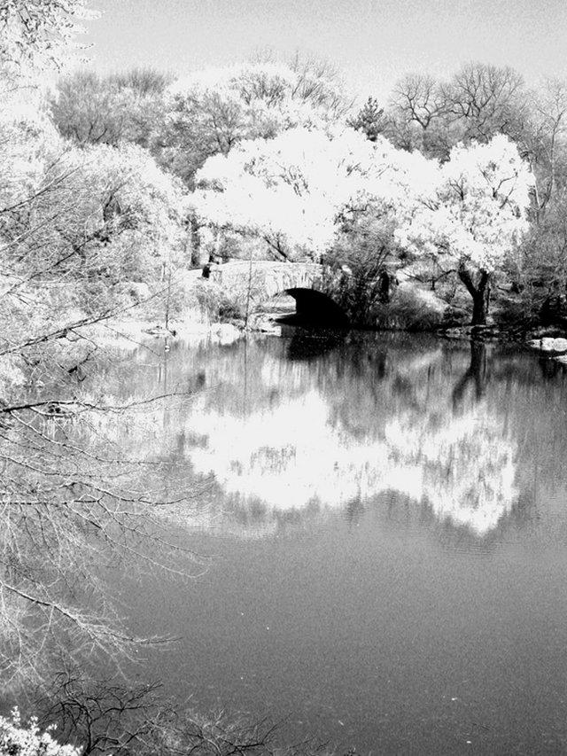 Central Park South Pond