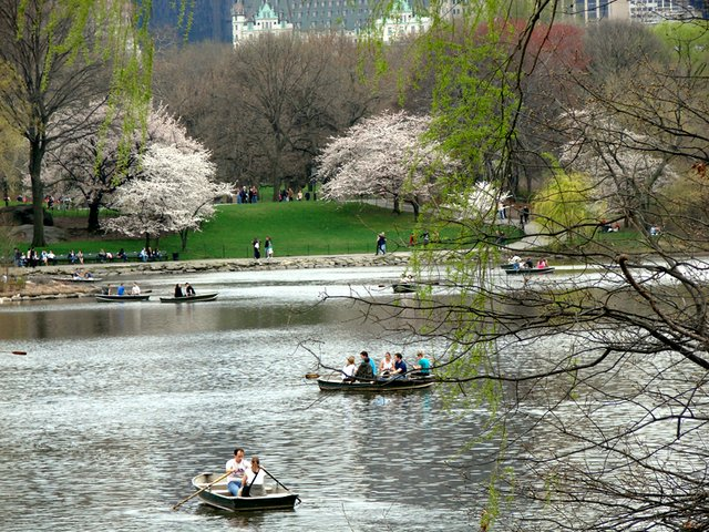 Boating in the Spring with cherry blossoms