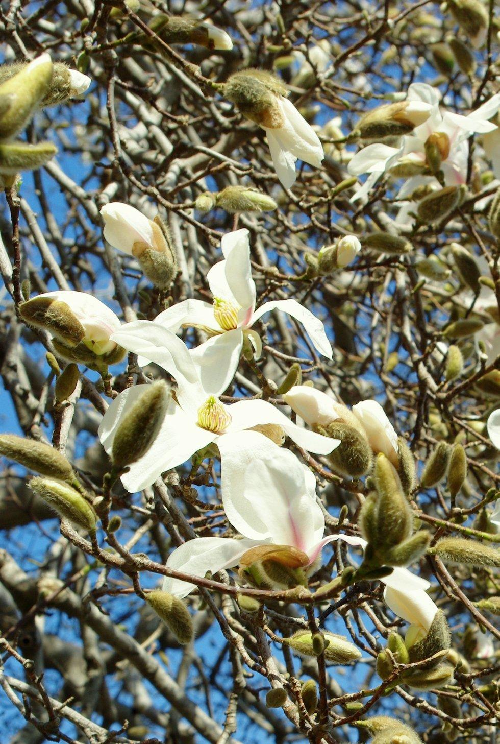Bursting Spring