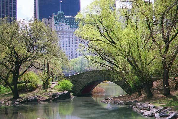 Central Park In Spring, plain and simple..