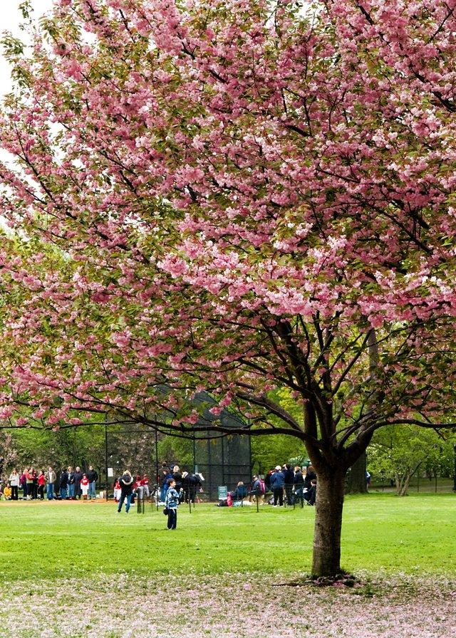 Baseball and Spring
