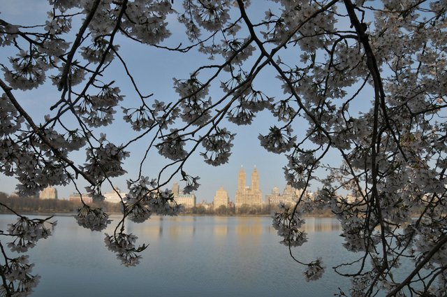 The beauty of Spring in Cental Park