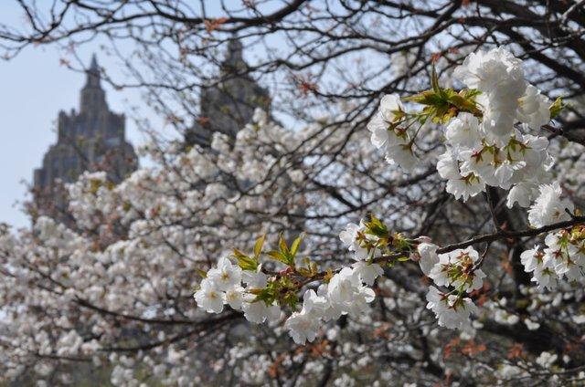 UWS Blooms