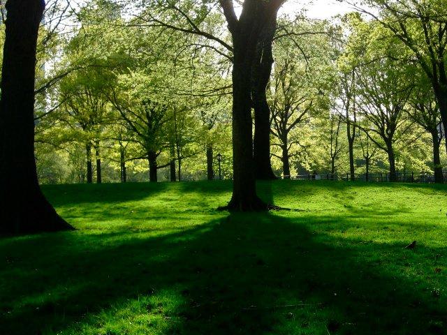Central Park Lush Green