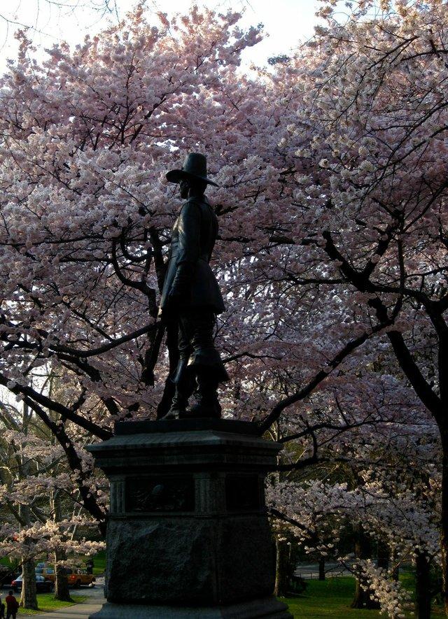 Central Park Blossoms