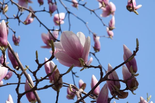 Blossoms Landing