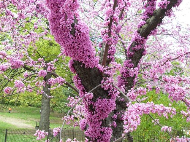 Amazing tree blossom