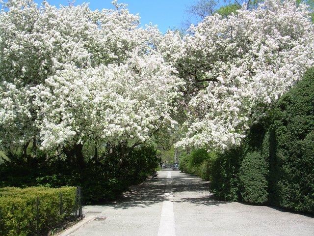 Spring is blooming