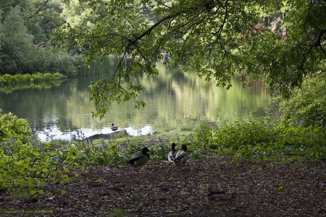 Pond View 11