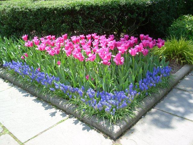 springtime in the garden