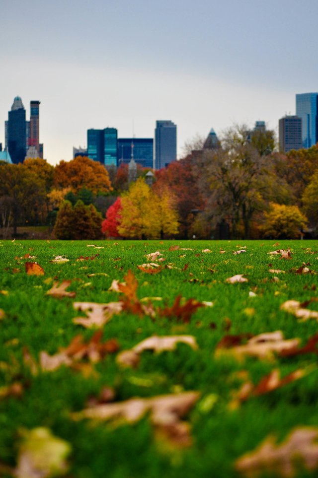 Fall at the Great Lawn