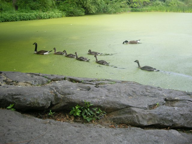 The Turtle Pond
