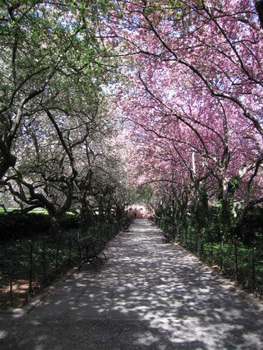 Spring Bloosoms