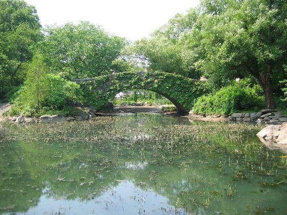 Central Park In Summer, plain and simple..