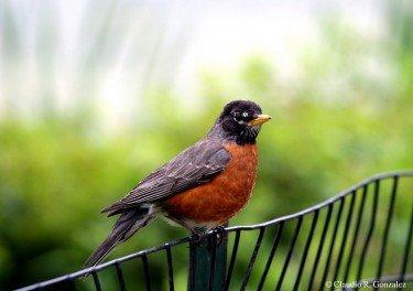 Beutiful Bird