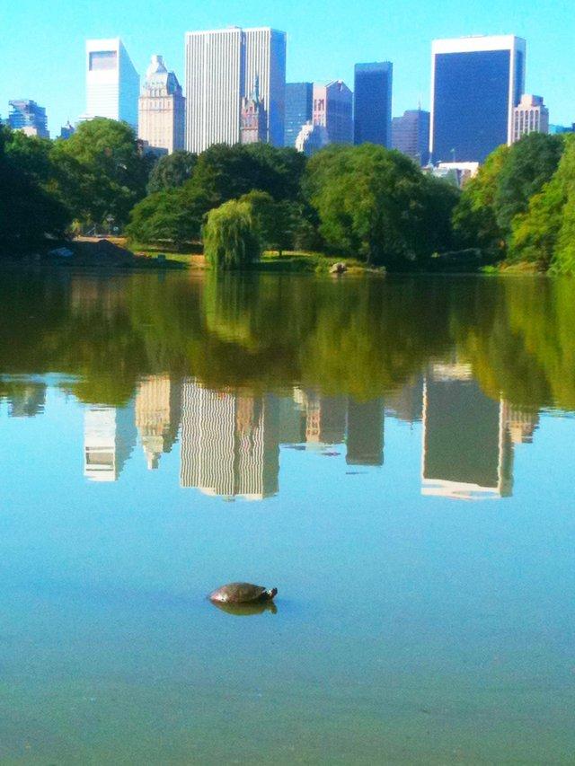 Urban Turtle