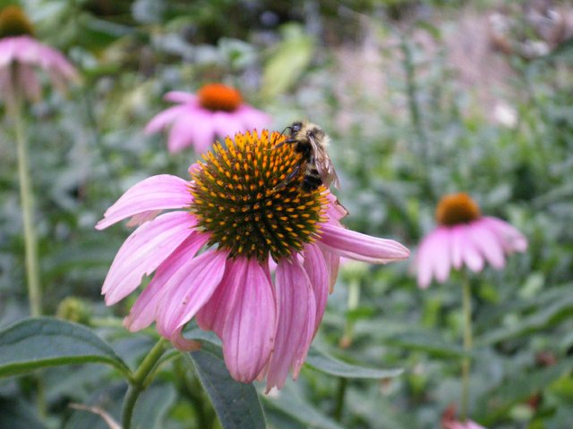A Bee in Central Park