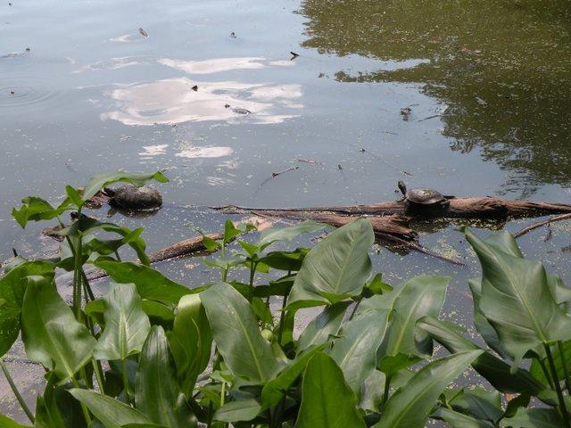 turtles lounging