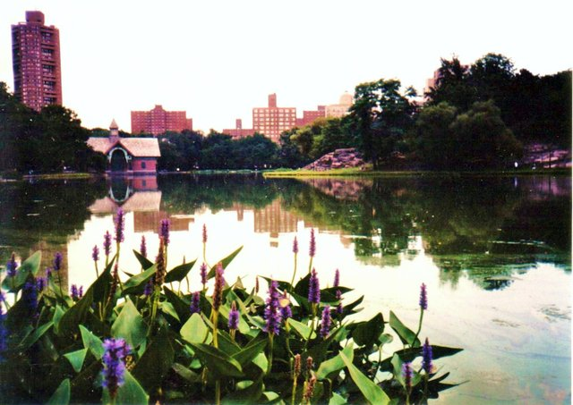 Harlem Meer from the West~Funky Colors