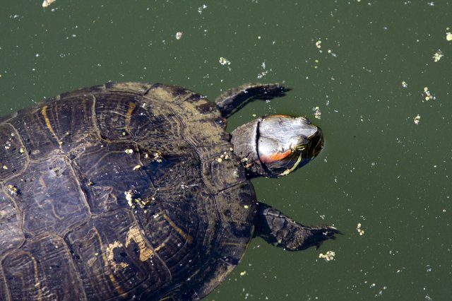 Turtle Close-up