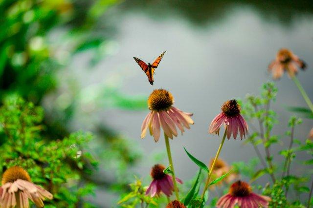 The Flying Flower