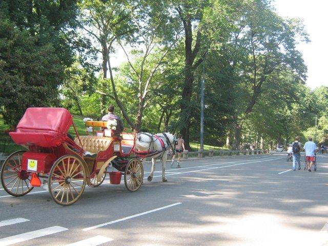 Paseos en Central Park