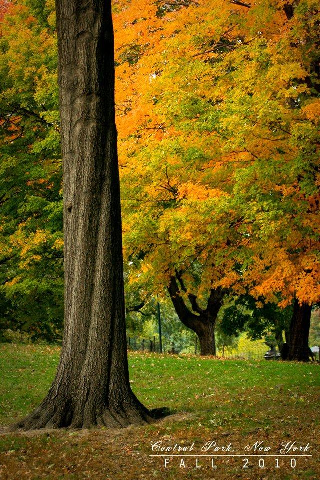 Lone Tree, Mall and Literary Walk