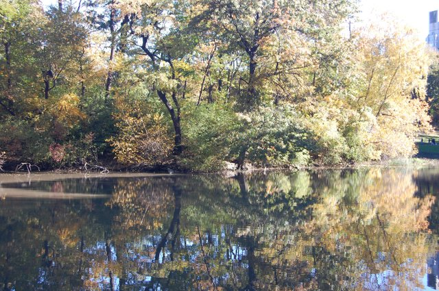 Tree reflections at the Pond