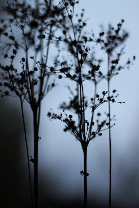 air herbs