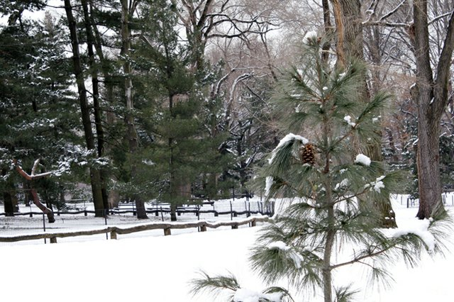 Pine Cone in the Park