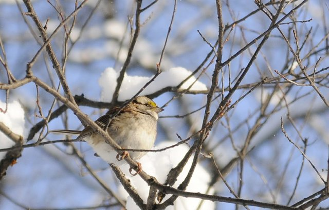 Bird is snow