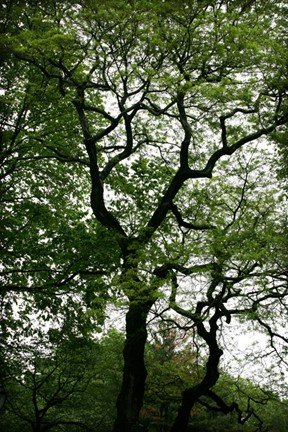 intertwining branches