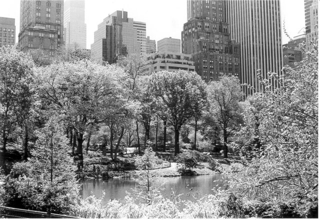 Central Park III